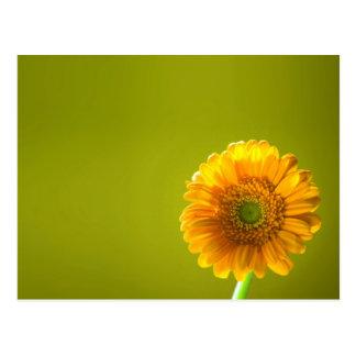 黄色いデイジーのガーベラの花 ポストカード