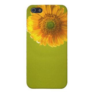 黄色いデイジーのガーベラの花 iPhone SE/5/5sケース
