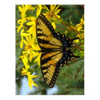 黄色いデイジーの東のトラのアゲハチョウ ポストカード