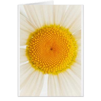 黄色いデイジー カード