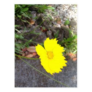 黄色いデイジー ポストカード