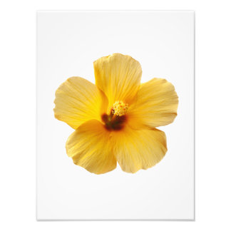 黄色いハイビスカスの熱帯花によっては花柄が開花します フォトプリント