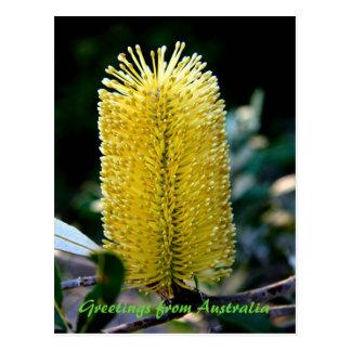 黄色いバンクシア2のオーストラリアからの挨拶 ポストカード