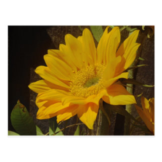 黄色いヒマワリ ポストカード
