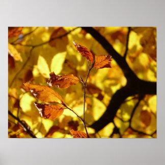黄色いブナの葉のプリントの芸術ポスター ポスター