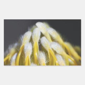 黄色いプロテア 長方形シール