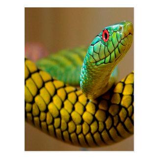黄色いヘビの赤の目 ポストカード