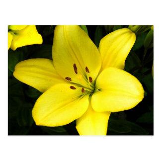 黄色いユリの花の花 ポストカード