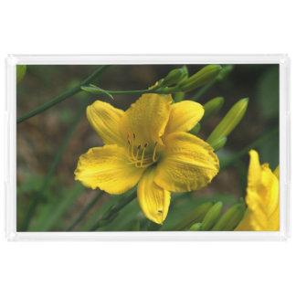 黄色いユリ、虚栄心の皿 アクリルトレー