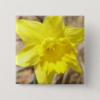 黄色いラッパスイセンによっては正方形Pinが開花します 5.1cm 正方形バッジ