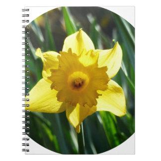 黄色いラッパスイセン02.2_rd ノートブック