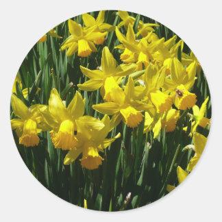 黄色いラッパスイセンIの陽気な春の花 ラウンドシール
