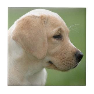 黄色いラブラドル・レトリーバー犬の子犬 タイル