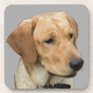 黄色いラブラドル・レトリーバー犬 コースター