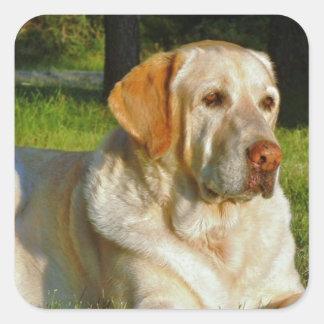 黄色いラブラドル・レトリーバー犬 スクエアシール