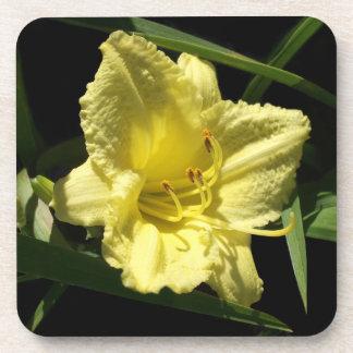 黄色いワスレグサの花のHemerocallis コースター