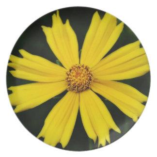 黄色い宇宙の花のクローズアップ プレート
