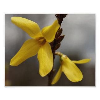 黄色い春の花 フォトプリント