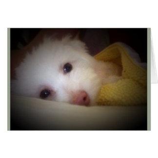 黄色い毛布に置いている甘い子犬 カード