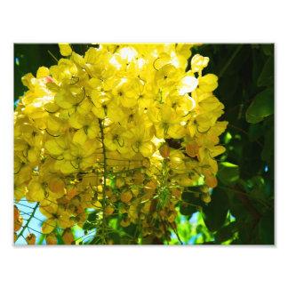 黄色い熱帯花ポスター フォトプリント