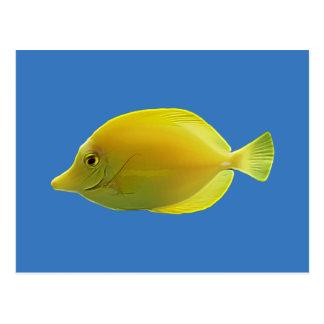 黄色い熱帯魚 ポストカード