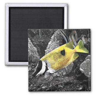 黄色い熱帯魚 マグネット