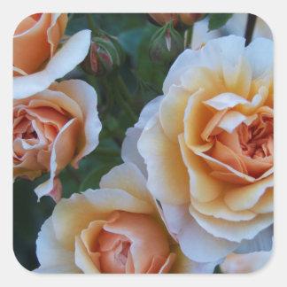 黄色い白いバラ スクエアシール