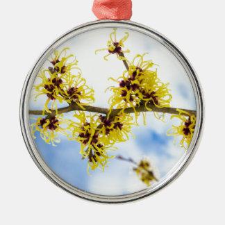 黄色い花および青空とのHamamelisのmollis メタルオーナメント