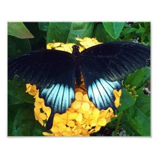 黄色い花の美しく青い蝶 フォトプリント