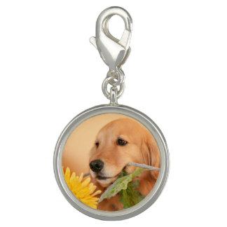 黄色い花を持つかわいいゴールデン・リトリーバー犬 チャーム