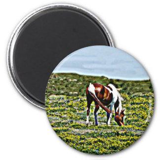 黄色い花を持つペンキの馬を牧草を食べること マグネット