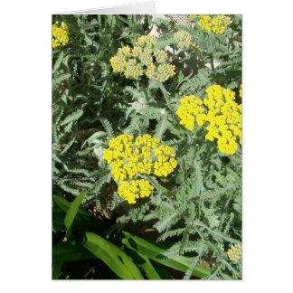 黄色い花 カード