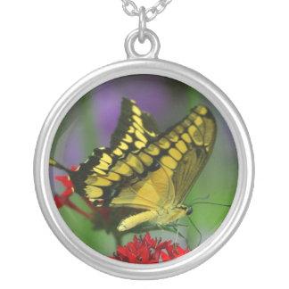 黄色い蝶ネックレス シルバープレートネックレス