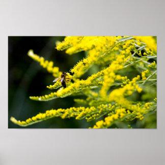 黄色い野生の花の蜜蜂 ポスター