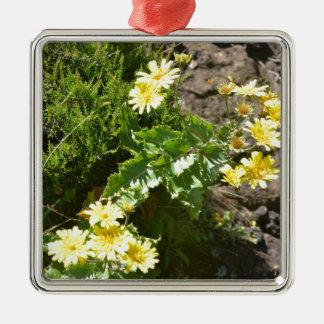 黄色い野生花- Tolpis Azorica メタルオーナメント