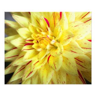 黄色い開花 フォトプリント