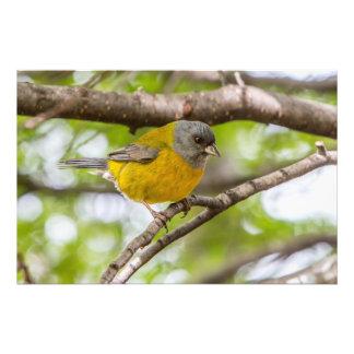 黄色い鳥 フォトプリント