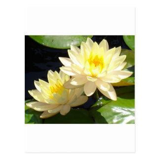 黄色い《植物》スイレン ポストカード
