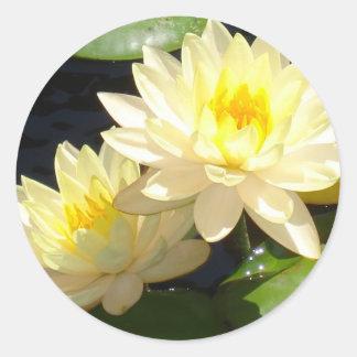 黄色い《植物》スイレン ラウンドシール