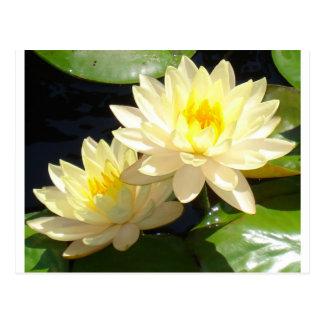 黄色い《植物》スイレン 葉書き