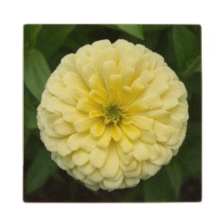 黄色い《植物》百日草の花の木のコースター ウッドコースター