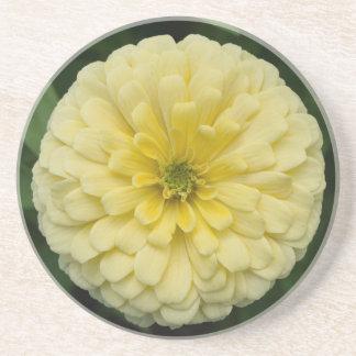 黄色い《植物》百日草の花の砂岩コースター コースター