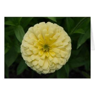 黄色い《植物》百日草の花カード カード
