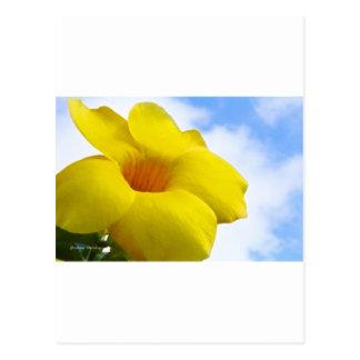 黄色いFlower.jpg ポストカード