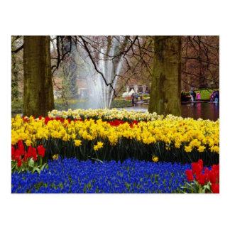 黄色いKeukenhofは、アムステルダムのオランダf庭いじりをします ポストカード