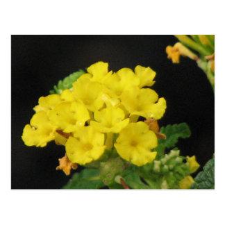 黄色いLantana ポストカード
