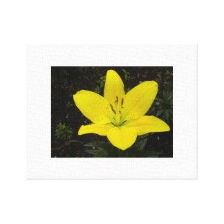 黄色いLillyのキャンバスの写真 キャンバスプリント