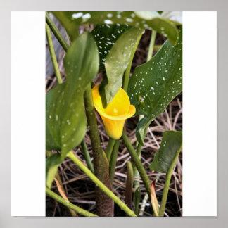 黄色いLilly 5 25 2009年 ポスター