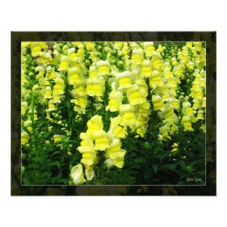 黄色いSnapdragon分野の写真 フォトプリント
