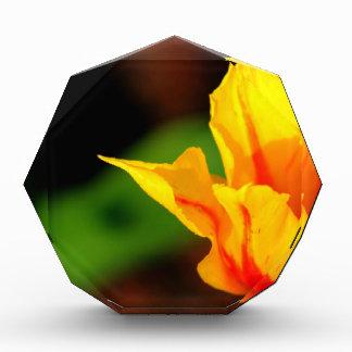 黄色およびオレンジチューリップ 表彰盾